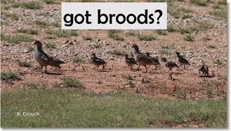 broods 2