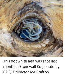 Eyeworms