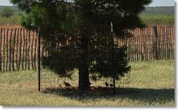 quailtree